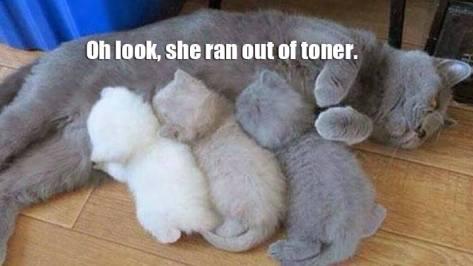 toner cat