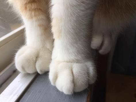 George feet