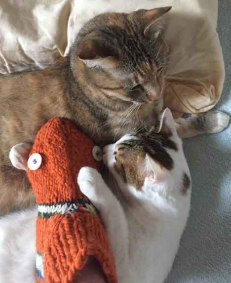 nemo kittens